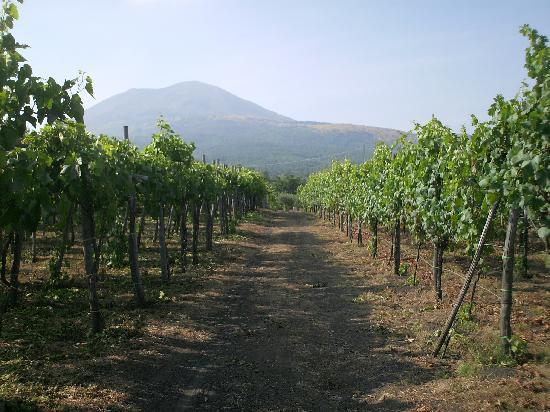 Cantina Del Vesuvio Winery Tour