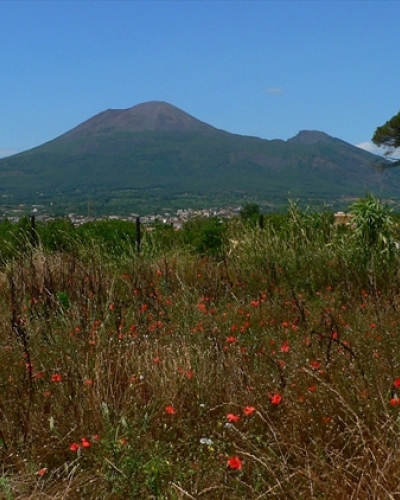 Vesuvius Wine Tour